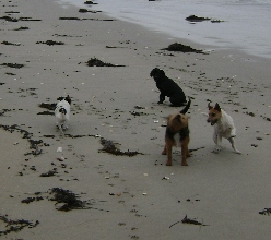 dogs_on_beach