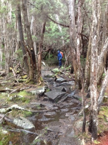 The Overland Track Tasmania March 2015